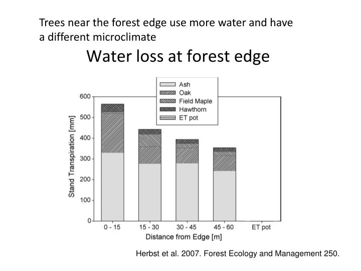 Water loss at forest edge