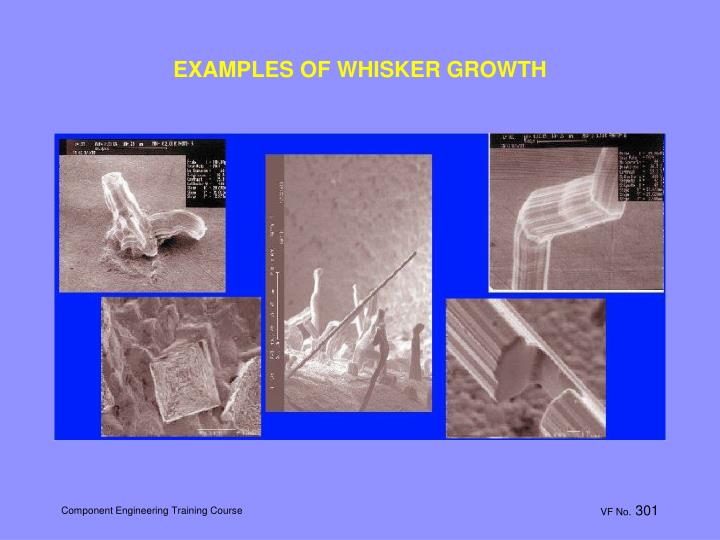 EXAMPLES OF WHISKER GROWTH