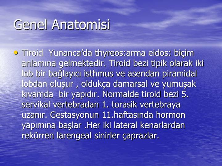 Genel anatomisi