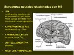 estructuras neurales relacionadas con me