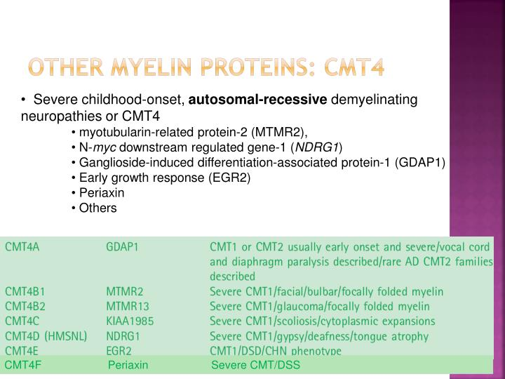 Other myelin proteins: Cmt4