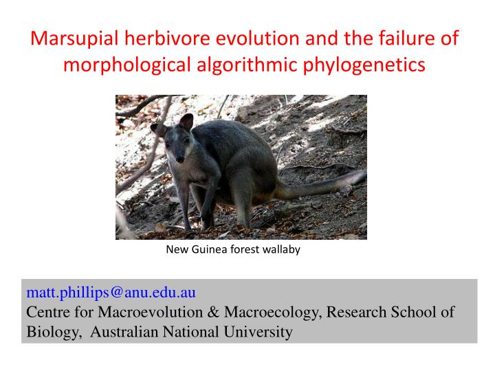 Marsupial herbivore evolution and the failure of morphological algorithmic phylogenetics