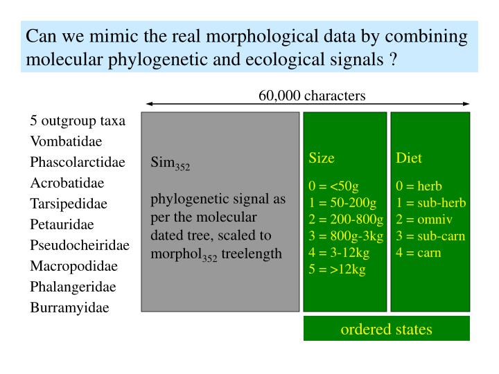 Can we mimic the real morphological data by combining molecular phylogenetic and ecological signals ?