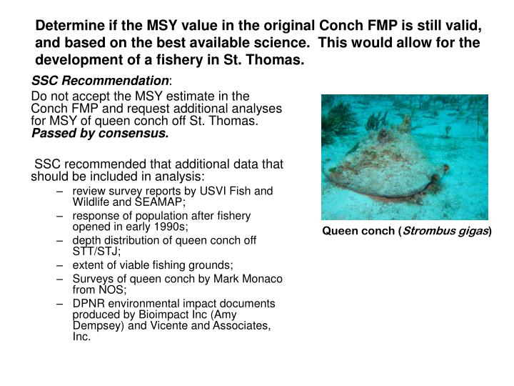 Determine if the MSY value in the original Conch FMP is still valid, and based on the best available science.  This would allow for the development of a fishery in St. Thomas.