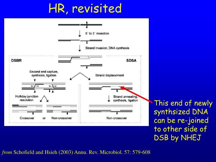HR, revisited