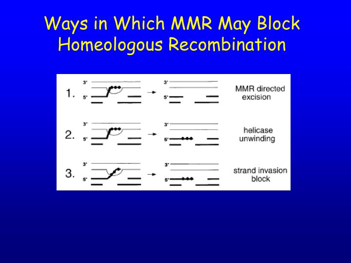 Ways in Which MMR May Block