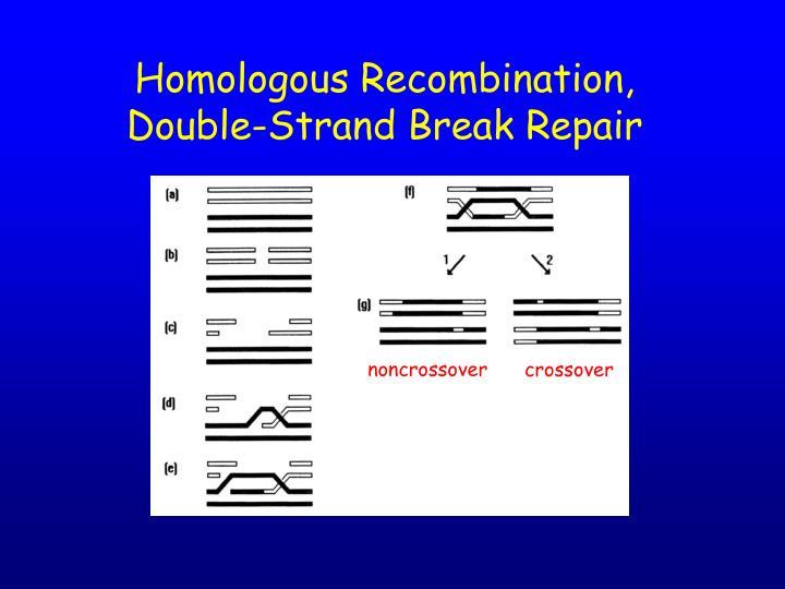 Homologous Recombination,