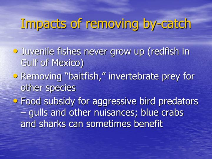 Impacts of removing by-catch