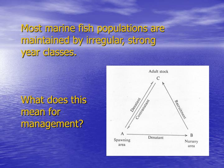 Most marine fish populations are maintained by irregular, strong year classes.