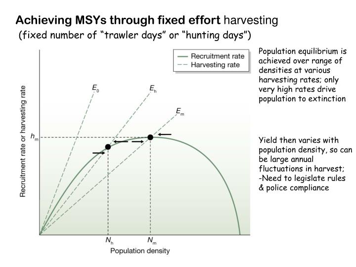 Achieving MSYs through fixed effort