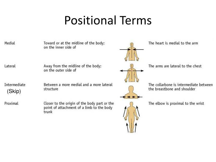 Positional Terms