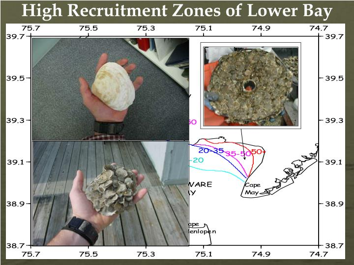 High Recruitment Zones of Lower Bay