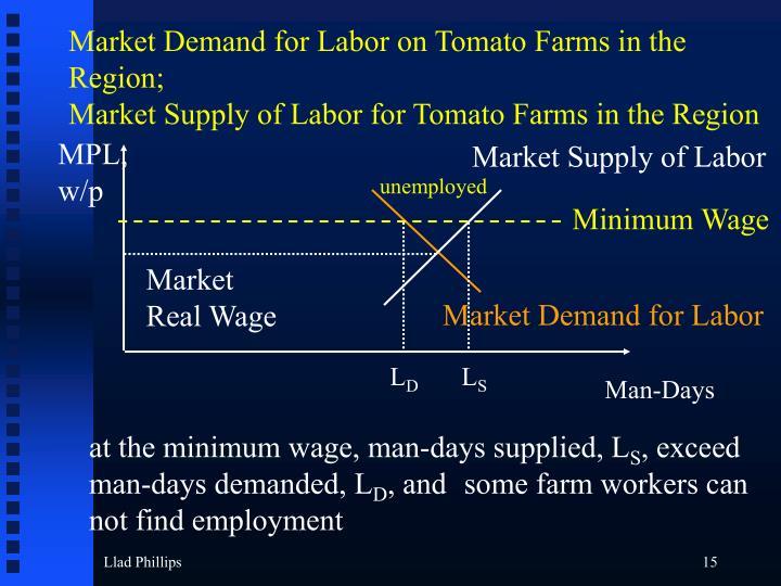 Market Demand for Labor on Tomato Farms in the