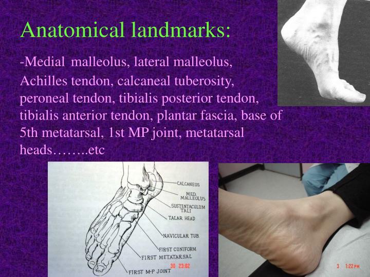 Anatomical landmarks: