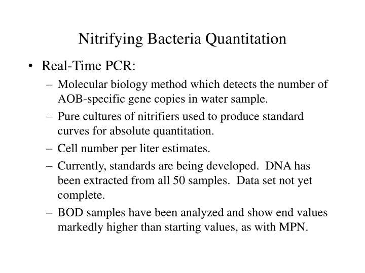 Nitrifying Bacteria Quantitation