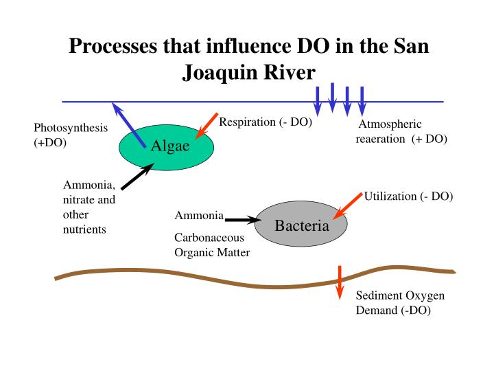 Processes that influence DO in the San Joaquin River