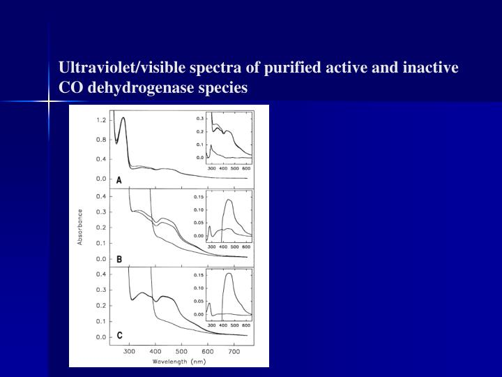 Ultraviolet/visible spectra of purified active and inactive CO dehydrogenase species