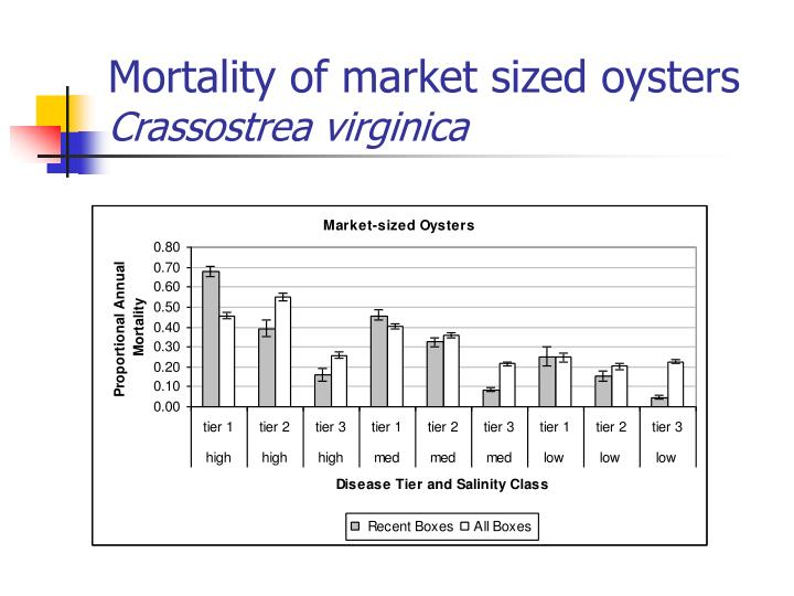 Mortality of market sized oysters