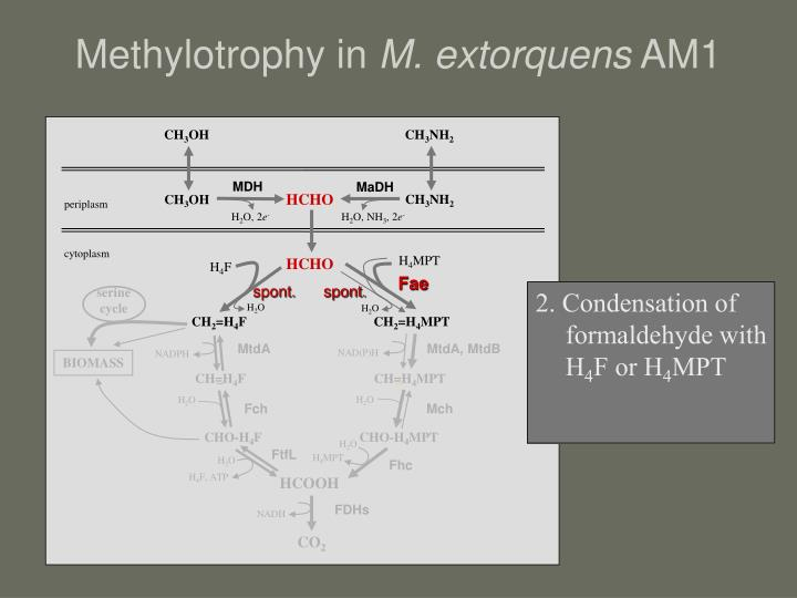 Methylotrophy in
