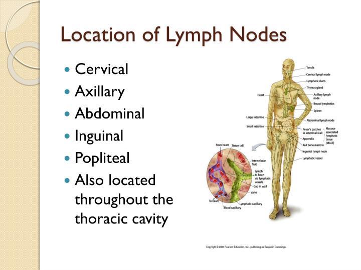 Location of Lymph Nodes