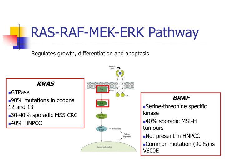 RAS-RAF-MEK-ERK Pathway