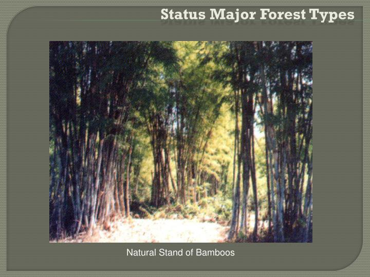 Status Major Forest Types