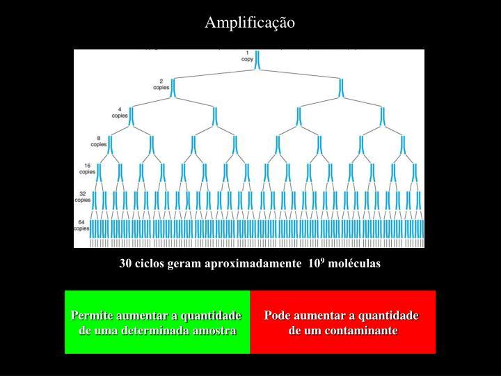 Amplificação