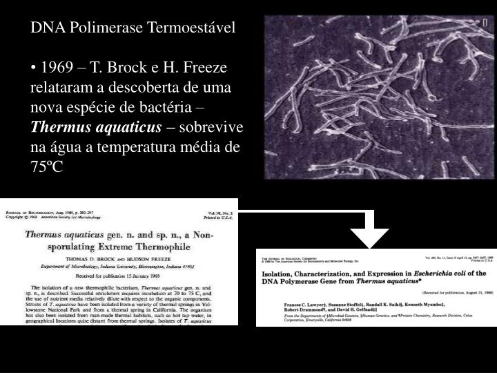 DNA Polimerase Termoestável