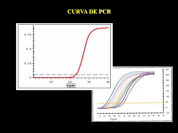 CURVA DE PCR