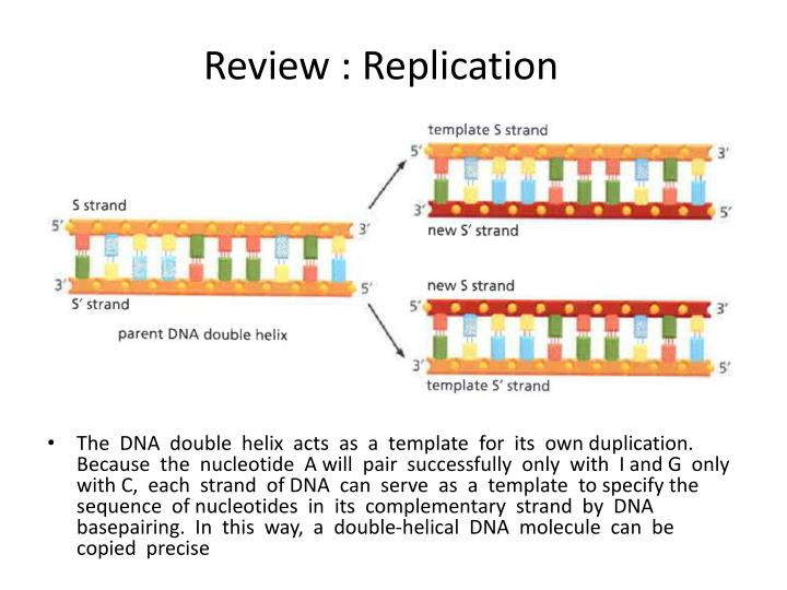 Review replication