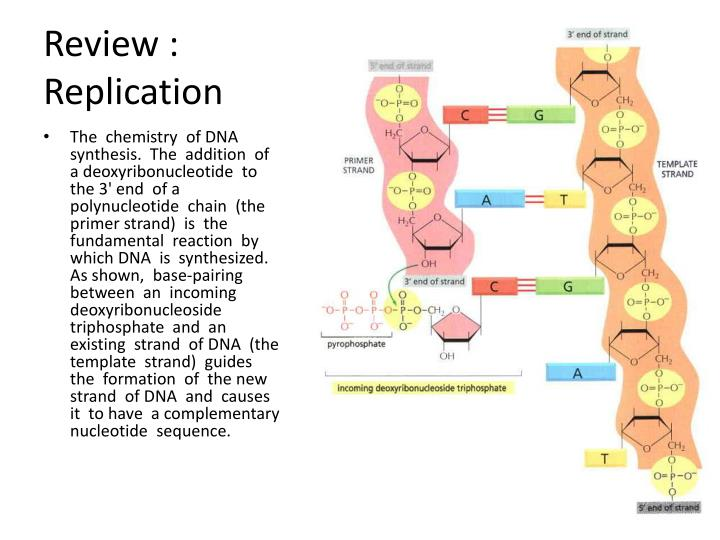 Review replication1