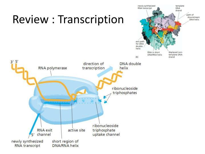 Review : Transcription