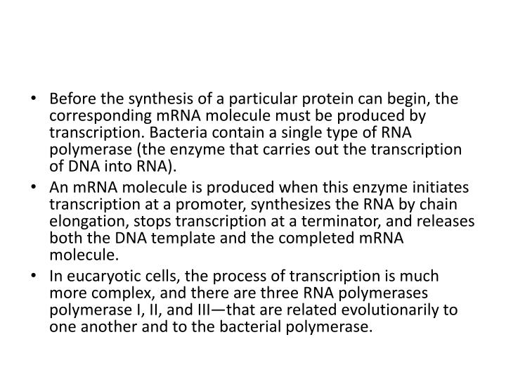 Before the synthesis of a particular protein can begin, the corresponding mRNA molecule must be produced by transcription. Bacteria contain a single type of RNA polymerase (the enzyme that carries out the transcription of DNA into RNA).