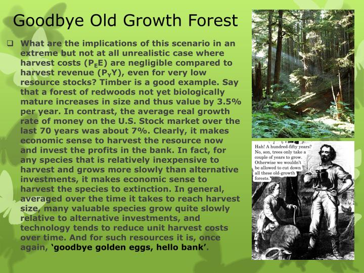 Goodbye Old Growth Forest