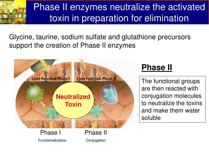 Phase II enzymes neutralize the activated toxin in preparation for elimination