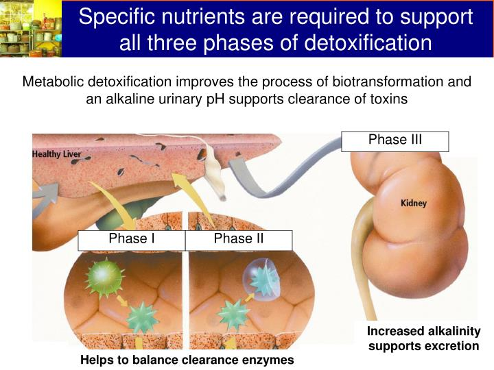 Specific nutrients are required to support all three phases of detoxification