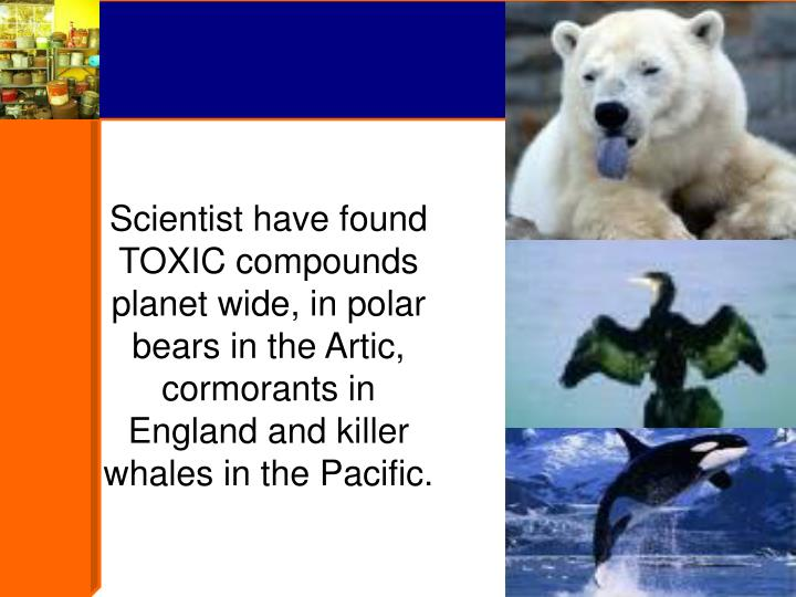 Scientist have found TOXIC compounds planet wide, in polar bears in the Artic, cormorants in England and killer whales in the Pacific.