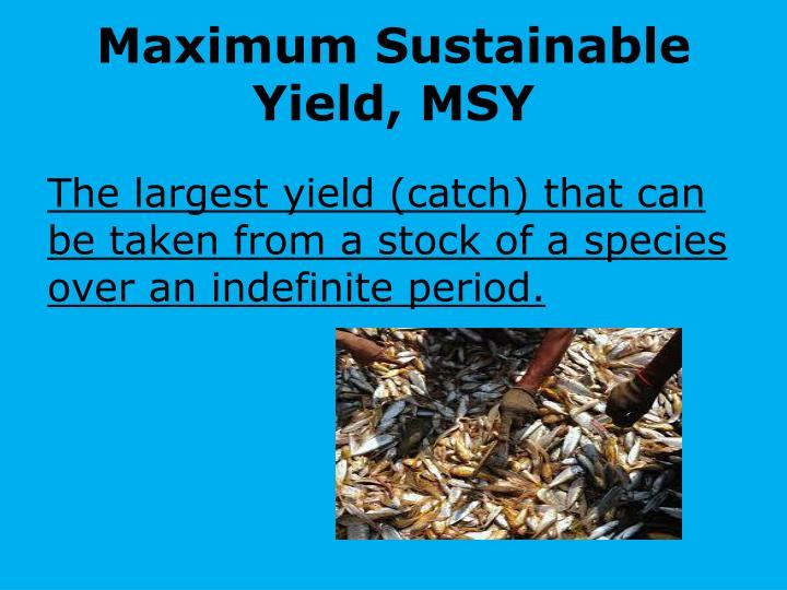 Maximum Sustainable Yield, MSY