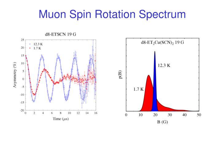 Muon Spin Rotation Spectrum