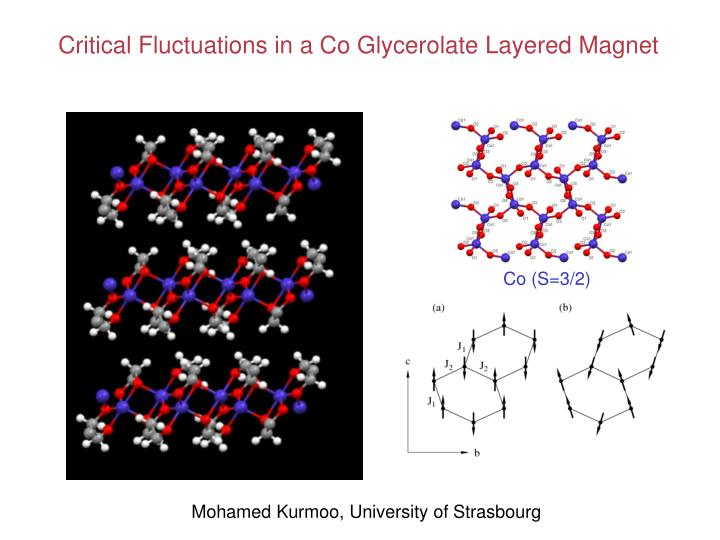 Critical Fluctuations in a Co Glycerolate Layered Magnet