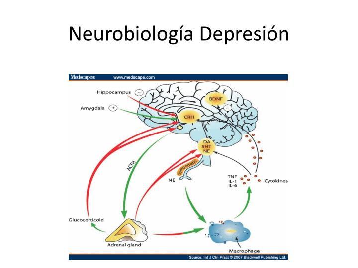 Neurobiología Depresión