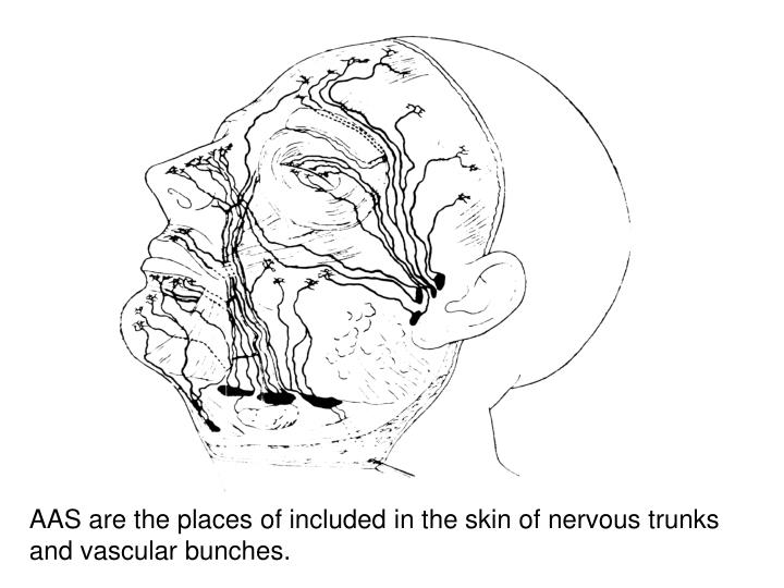 AAS are the places of included in the skin of nervous trunks and vascular bunches.