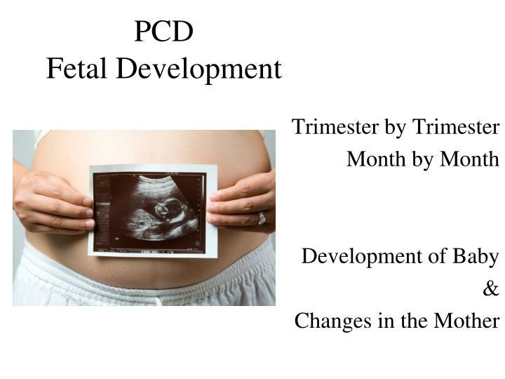 pcd fetal development n.