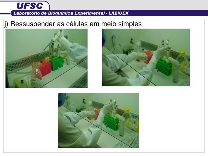 j) Ressuspender as células em meio simples
