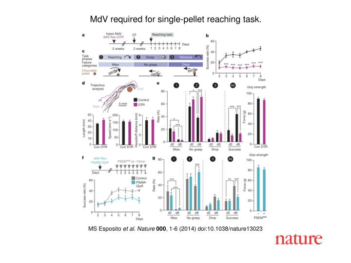 MdV required for single-pellet reaching task.