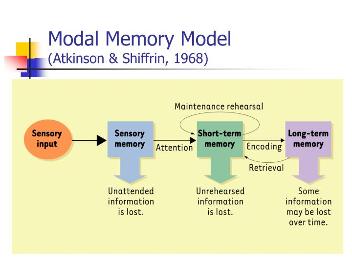 atkinson shiffrin memory model Atkinson & shiffrin 1 memory  atkinson- shiffrin model of memory brianna lesson 2 the attkinson-shiffrin's multi-store model 2012 sh coburgpsych.