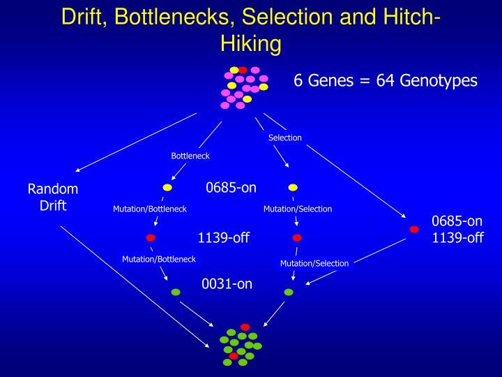 Drift, Bottlenecks, Selection and Hitch-Hiking