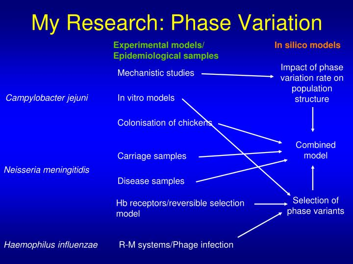 My research phase variation
