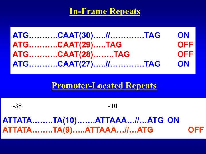 In-Frame Repeats