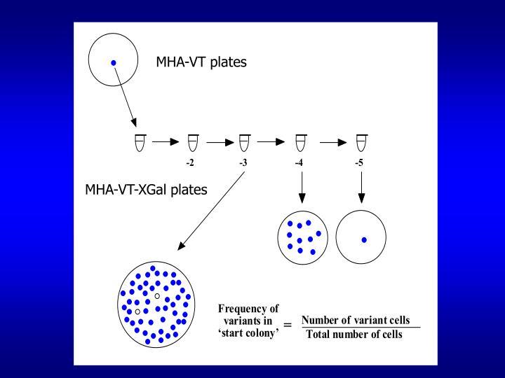 MHA-VT plates